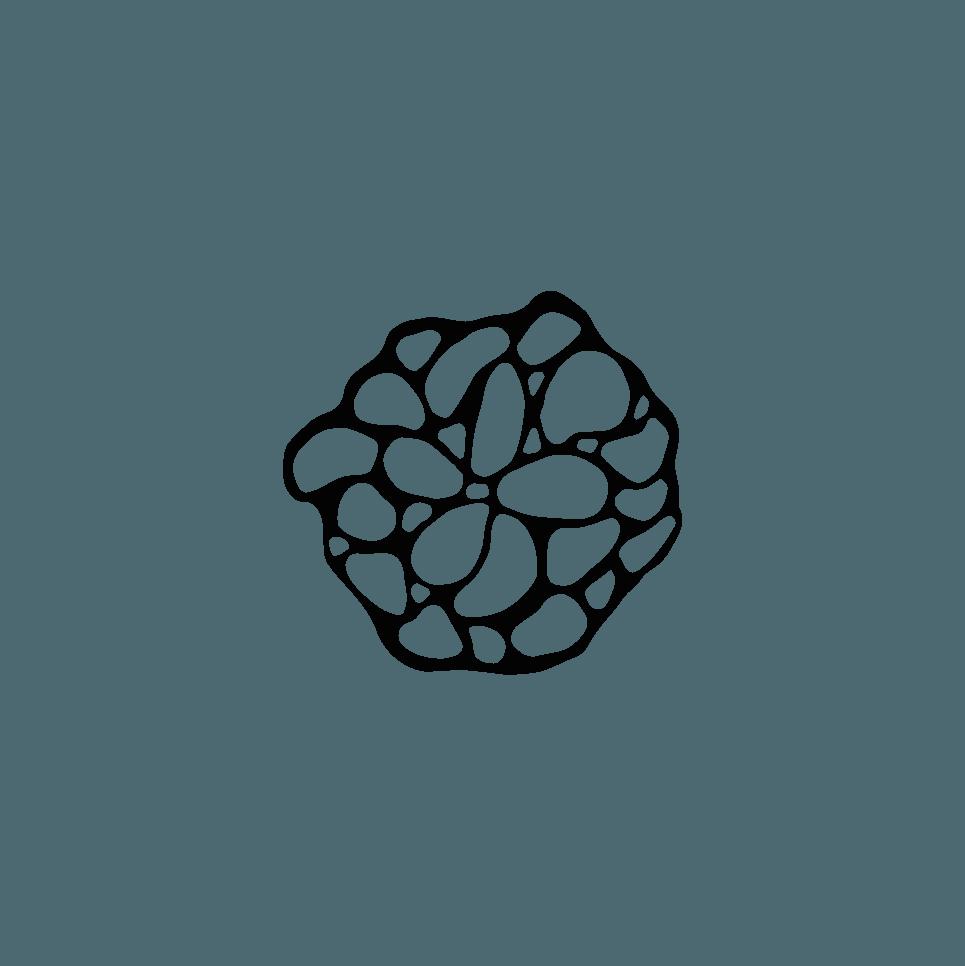 motif Coflo